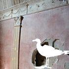 Ileana Hochmann | O Pássaro observador